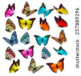 Stock vector big collection of colorful butterflies vector 257889296