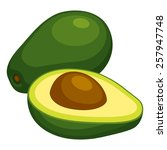 avocado | Shutterstock .eps vector #257947748