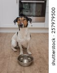 dog bowl hungry meal eating | Shutterstock . vector #257979500