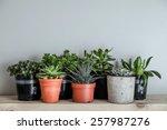lots of succulent plants indoors | Shutterstock . vector #257987276