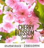 spring cherry blossom festival...