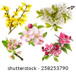 Stock photo spring flowers isolated on white background blossoms of apple tree cherry twig forsythia 258253790