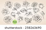 Stock vector set of hand drawn roses vector 258263690
