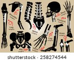 collection of orthopedic... | Shutterstock .eps vector #258274544