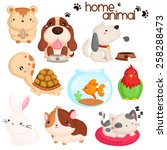 home pet vector set | Shutterstock .eps vector #258288473