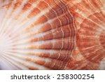 macro view of two seashells...