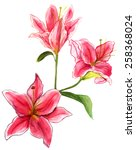 watercolour lilies on white...   Shutterstock . vector #258368024