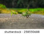 Small photo of Plant emerging through asphalt against all odds. Symbol for natural forces. Background and foreground are out of focus.