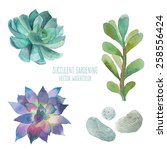 Watercolor Succulent Set....