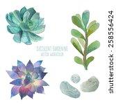 Watercolor Succulent Set....