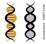 dna design  vector illustration. | Shutterstock .eps vector #258571136