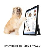 Stock photo a large dog scrolling through a social media website on a tablet device 258579119