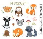 woodland animals and decor... | Shutterstock .eps vector #258597029
