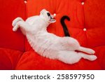 Stock photo cat sleeping on the orange armchair 258597950