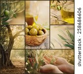 Nature Series. Collage Of Oliv...