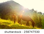 Horses And Sunny Morning In...