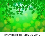 illustration of green leaves... | Shutterstock .eps vector #258781040