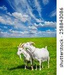 summer rural scene  two white... | Shutterstock . vector #258843086