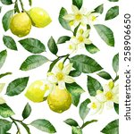 the branch with lemons on a... | Shutterstock .eps vector #258906650