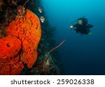 woman diver approaches elephant ... | Shutterstock . vector #259026338