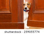 Jack Russell Terrier Dog At Th...