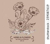 poppy flowers. hand drawn...   Shutterstock .eps vector #259087619
