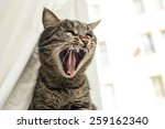 Stock photo angry cat 259162340