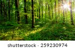 forest trees. nature green wood ... | Shutterstock . vector #259230974