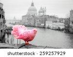 pink pigeon on bridge railing... | Shutterstock . vector #259257929