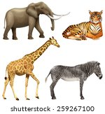 Four Wild African Animals On A...