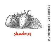strawberry  vintage berries | Shutterstock .eps vector #259385519