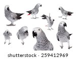 Stock photo african grey parrot psittacus erithacus isolated on white background 259412969