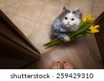 Stock photo cat with a bouquet at the feet of mistress 259429310