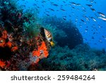 lots of fish in a mediterranean ... | Shutterstock . vector #259484264