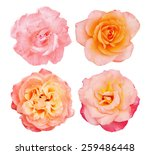 Collection Of Beautiful Roses ...