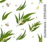 seamless pattern of eucalyptus... | Shutterstock .eps vector #259518320