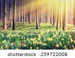 Spring Forest Covered By Yello...