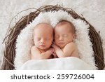 Twin Newborns In A Basket