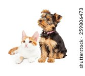 Stock photo cute little kitten and yorkshire terrier breed dog together looking off to the side 259806473