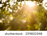 bokeh leaf with sunlight  warm... | Shutterstock . vector #259832348