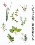 fresh herbs | Shutterstock . vector #259832474