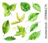set of spring leaves...   Shutterstock .eps vector #259886174
