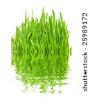 fresh spring grass and nice... | Shutterstock . vector #25989172