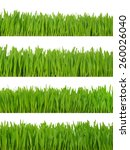 green grass isolated on white | Shutterstock . vector #260026040