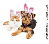 Stock photo cute puppy and kitten laying together wearing pink easter bunny ears 260052626