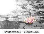 Sunlight Radiated Into Lotus...