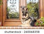 Guarding Dog
