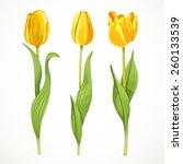 three vector yellow flowers... | Shutterstock .eps vector #260133539