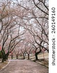 sakura alley in the park  | Shutterstock . vector #260149160