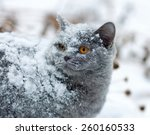 Cute Cat Covered With Snow...